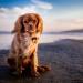 自宅で愛犬に能動的に楽しく遊んでもらって、愛犬と飼い主お互いが幸せになる方法